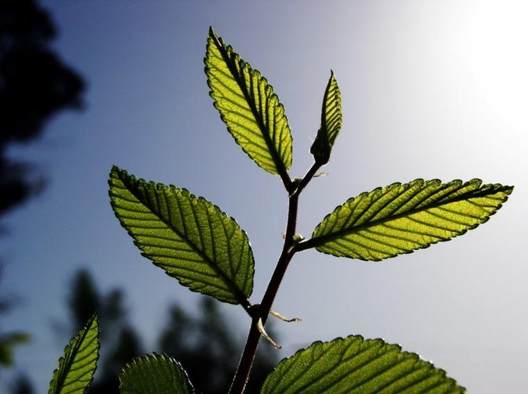 plantas fotosíntesis