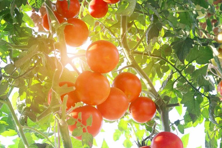 salsa-de-tomate-casera-verduras