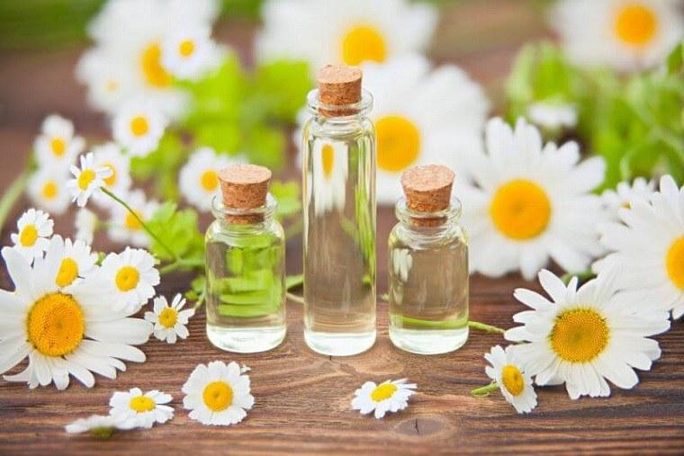 aceites esenciales-guia-manzanilla