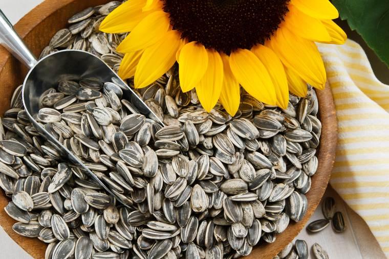 cómo mejorar el sistema inmune semillas