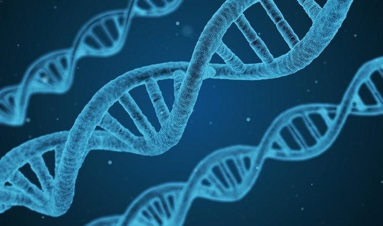 El papel de los genes en la salud y las enfermedades