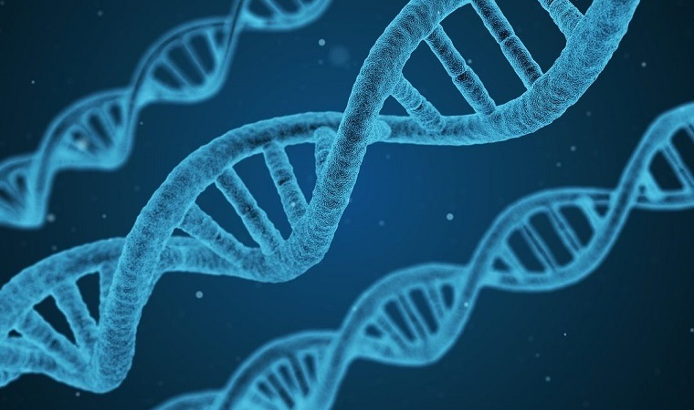 genes-dna-papel-salud