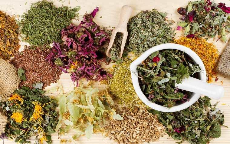 hierbas-curar-bronquitis-casa-ideas