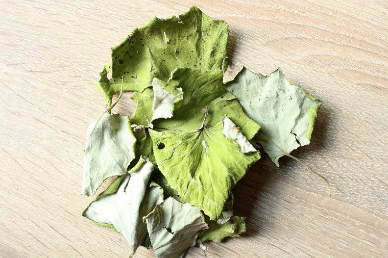 recetas-caseras-tos-seca-hojas