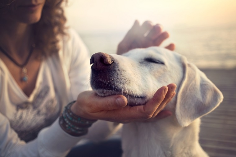 Tener un perro está vinculado con vivir una vida más larga y más saludable