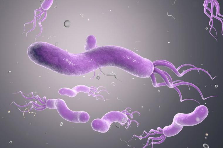 ulcera duodenal bacterias