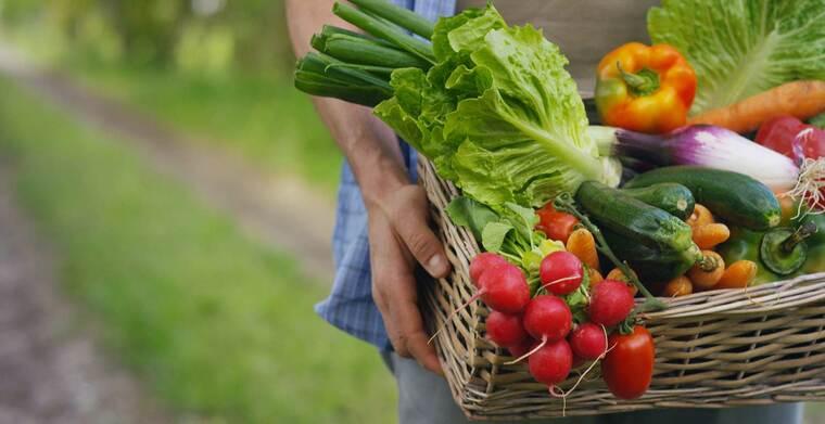 como mejorar el sistema inmune alimentos