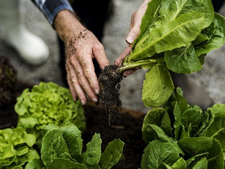Necesitamos seguir una dieta más sostenible pero quien se la puede permitir