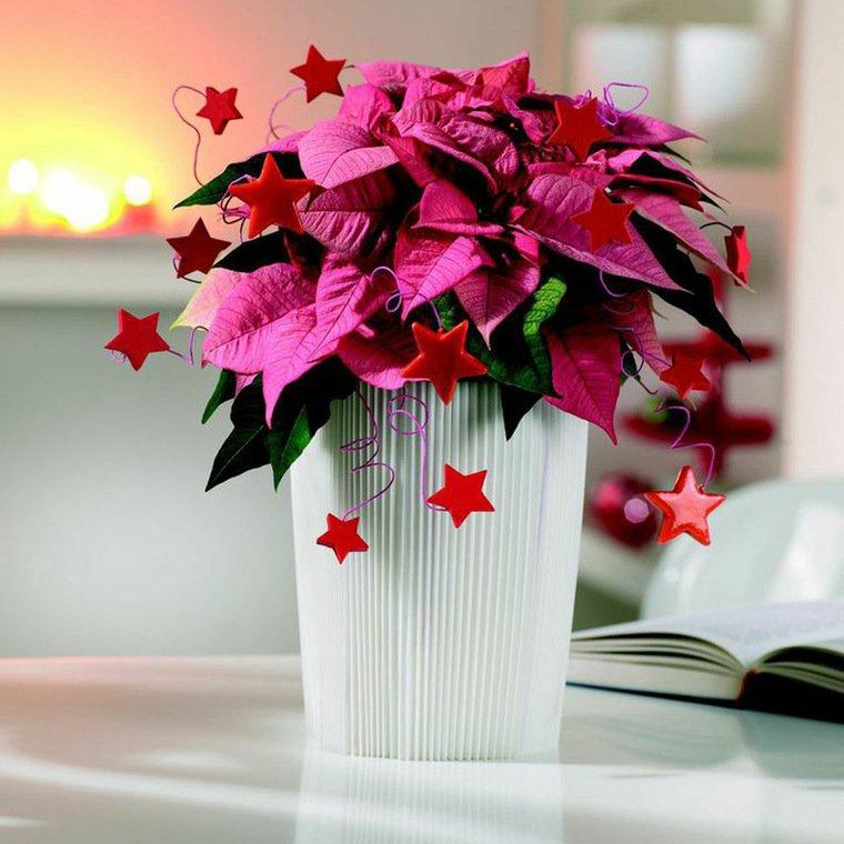 flor de pascua rosada