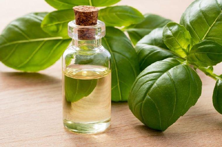 aceites esenciales albahaca