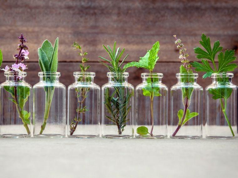 aceites esenciales plantas
