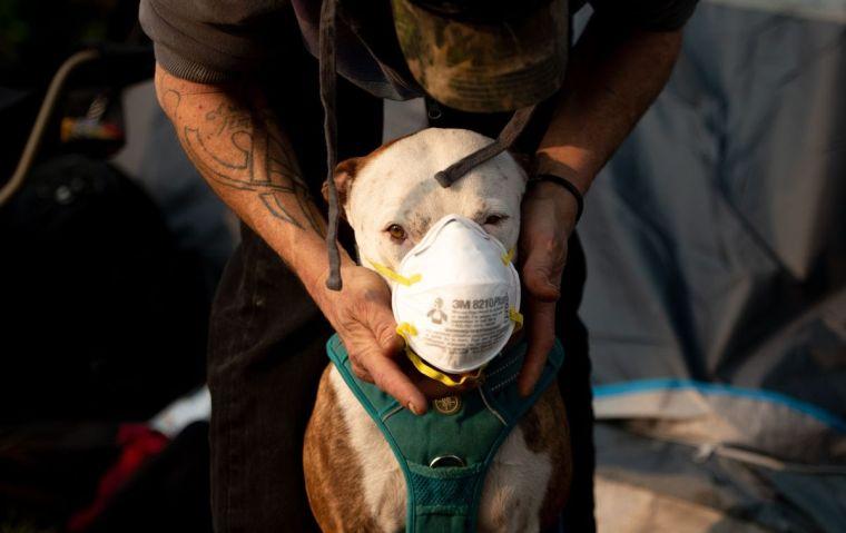 contaminación del aire mascota