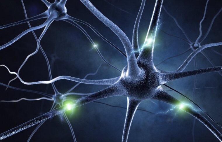 entrena tu cerebro funcion