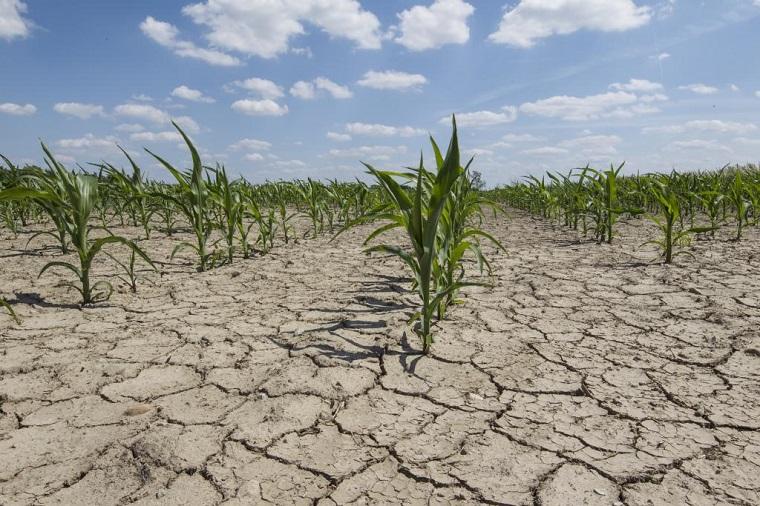 Erosión del suelo-vida-mundo-alimentos