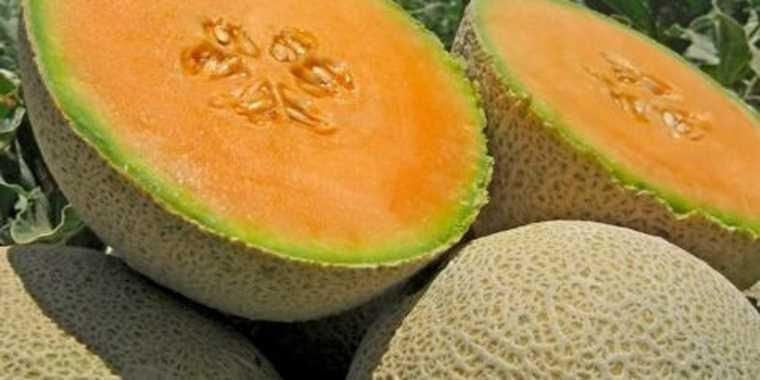 frutas y verduras melones