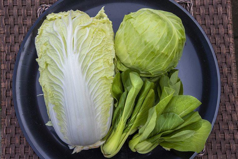 frutas y verduras repollo