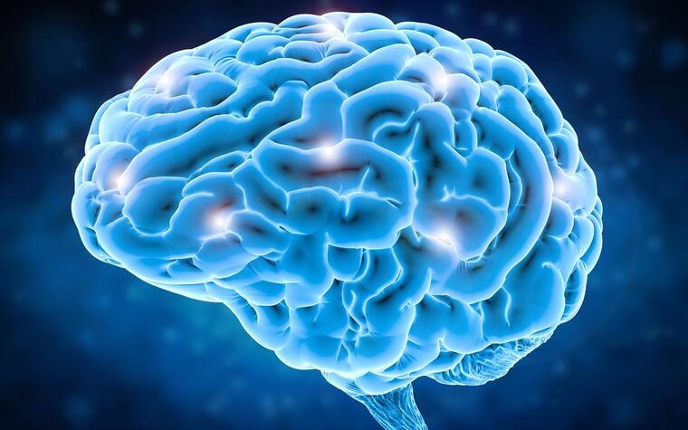 metabolismo basal cerebro