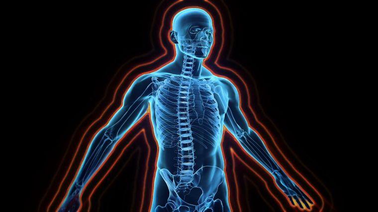 sistema inmune- uerpo