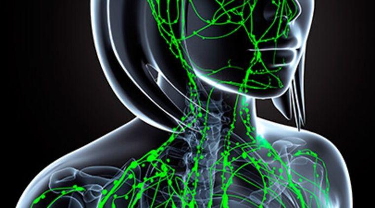sistema inmune ganglios