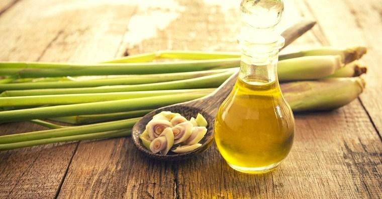 aceites-esenciales-puros-lemoncillo
