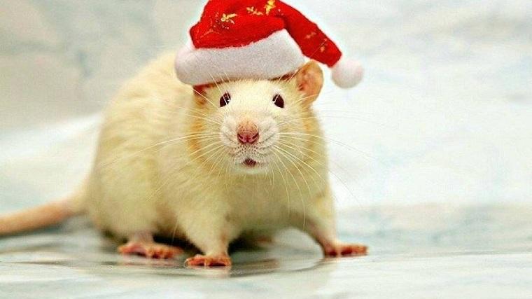 Año nuevo chino 2020-rata-blanca