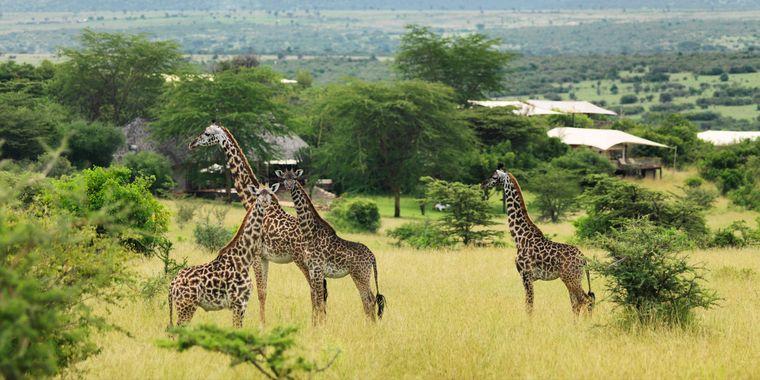 campamento itinerante fauna