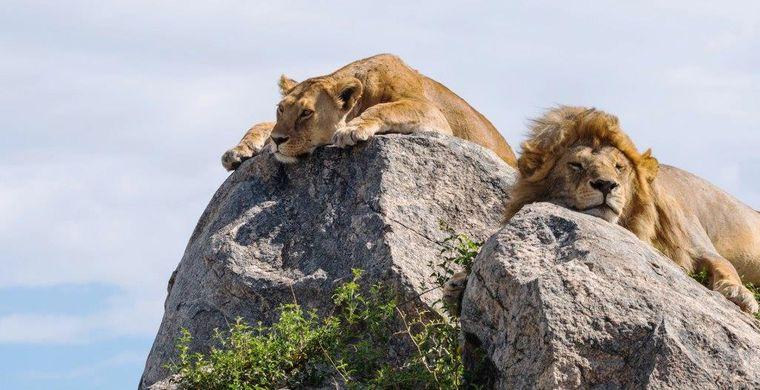 campamento itinerante leones