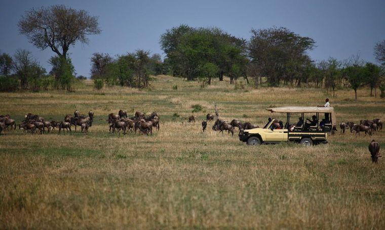campamento itinerante safari