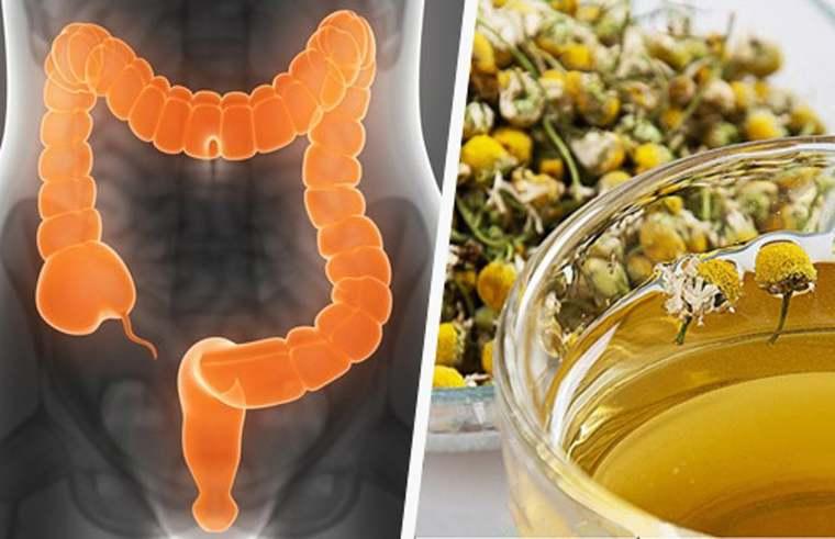 depurar el cuerpo intestino
