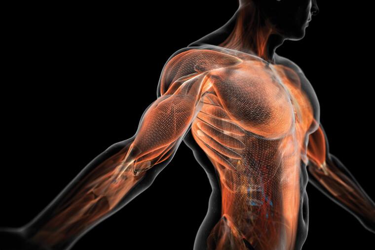 depurar el cuerpo musculos