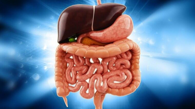 depurar el cuerpo organos