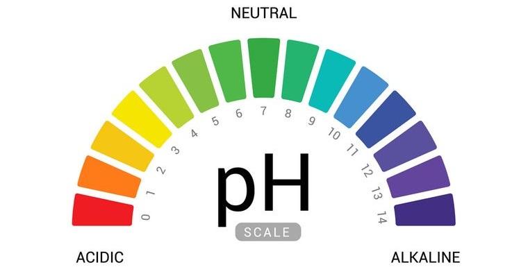espirulina para adelgazar pH cuerpo