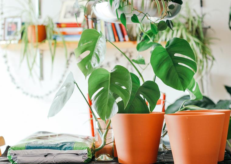 plantas feng shui-interior-beneficios-hogar