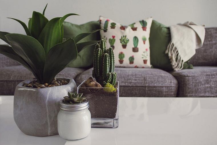 plantas feng shui-interior-beneficios-salud