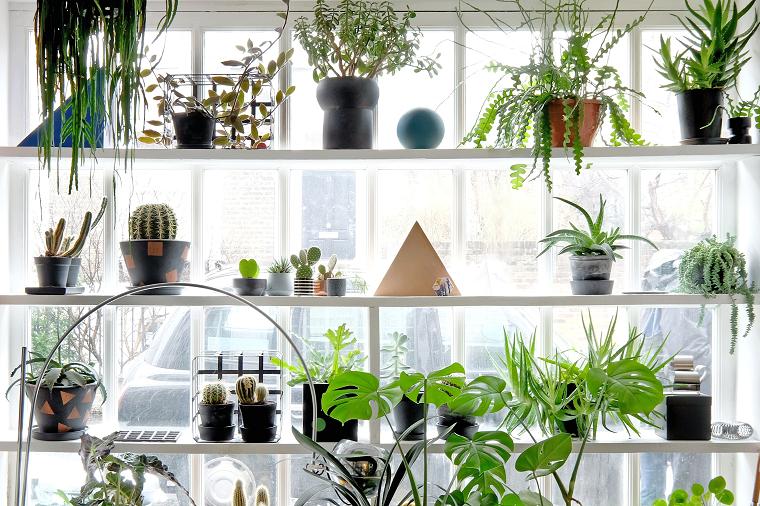 plantas feng shui interior-beneficios