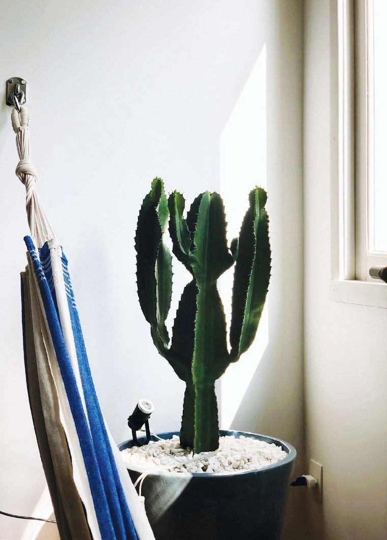 feng-shui-plantas-interior-cactus-ideas