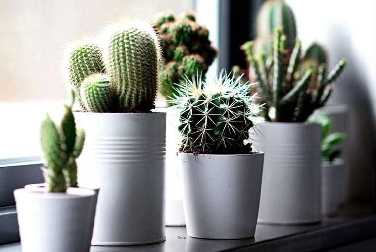 feng-shui-plantas-interior-cactus
