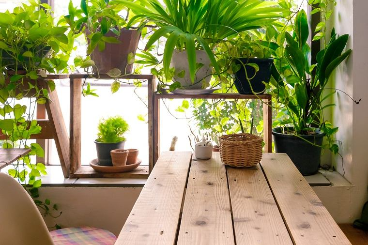 feng-shui-plantas-interior-ideas