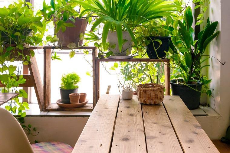 feng-shui-plantas-interior-ideas