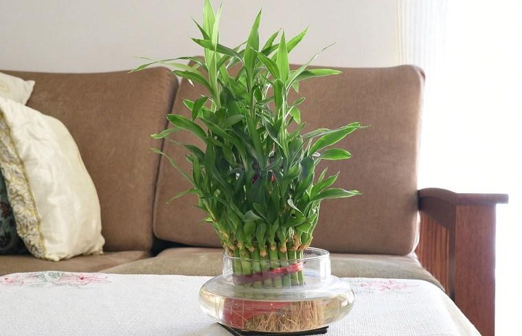 feng-shui-plantas-interior-mesa-sala