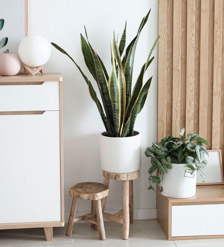 feng-shui-plantas-interior-naturaleza-hogar