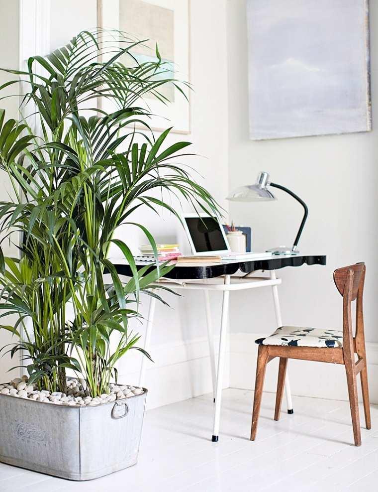 feng-shui-plantas-interior-oficina