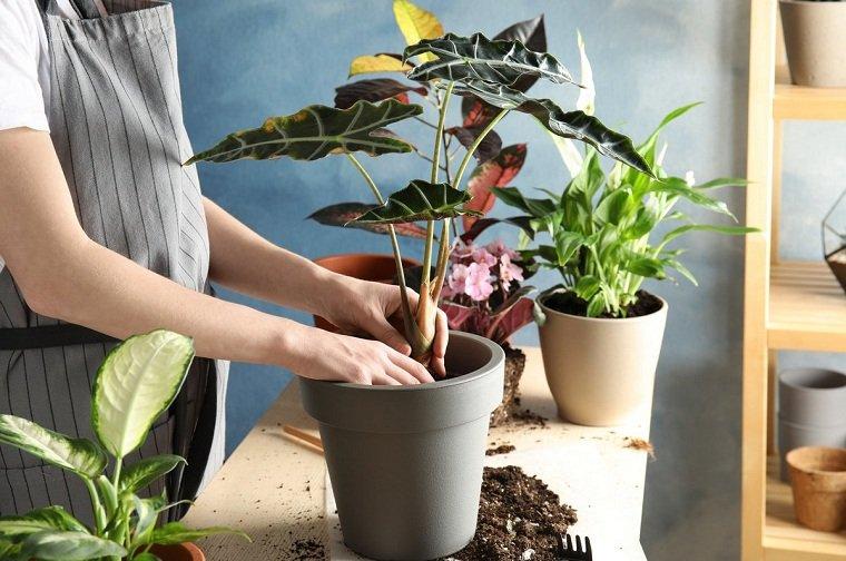 feng-shui-plantas-interior-plantar