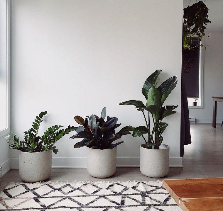 plantas feng shui-ideas-casa