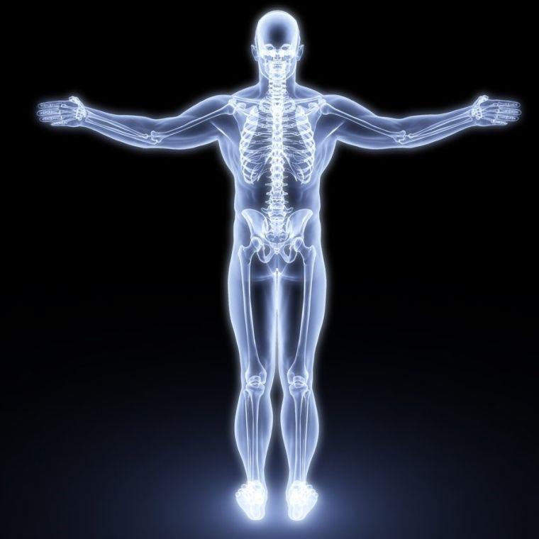 propiedades del colágeno cuerpo