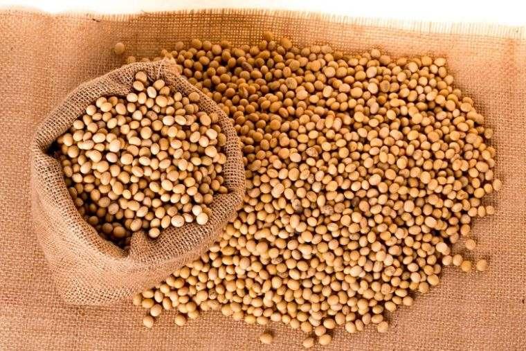 propiedades del colágeno soja