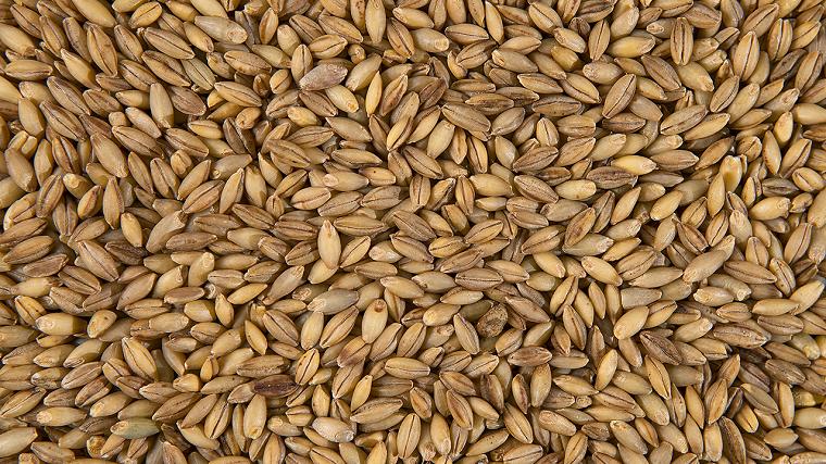 tipos-de-cereales-avena-beneficios-cebada