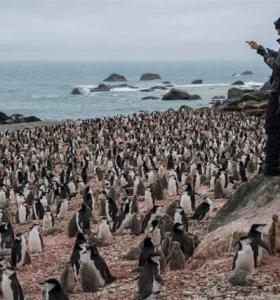 colonias-de-pinguinos-extincion-noticias