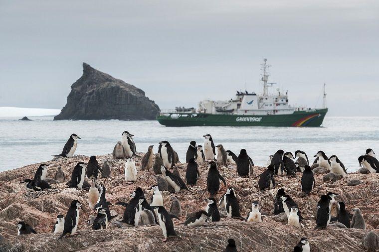 colonias de pingüinos-extincion-noticias-impactantes