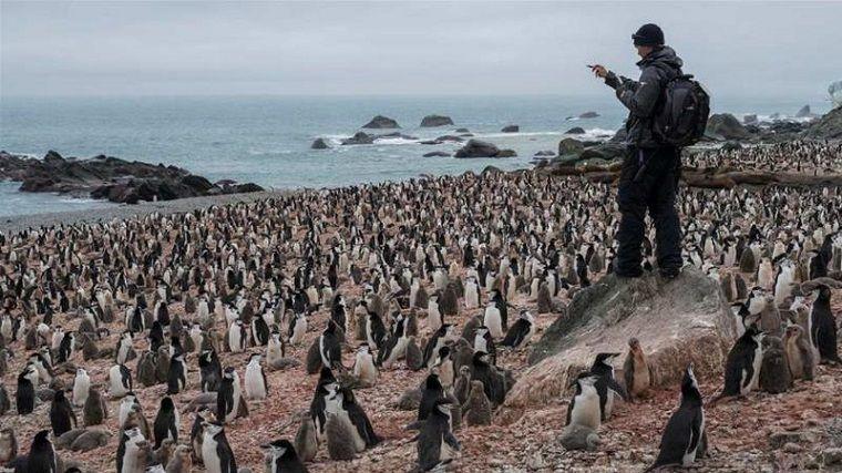 colonias de pingüinos-extincion-noticias